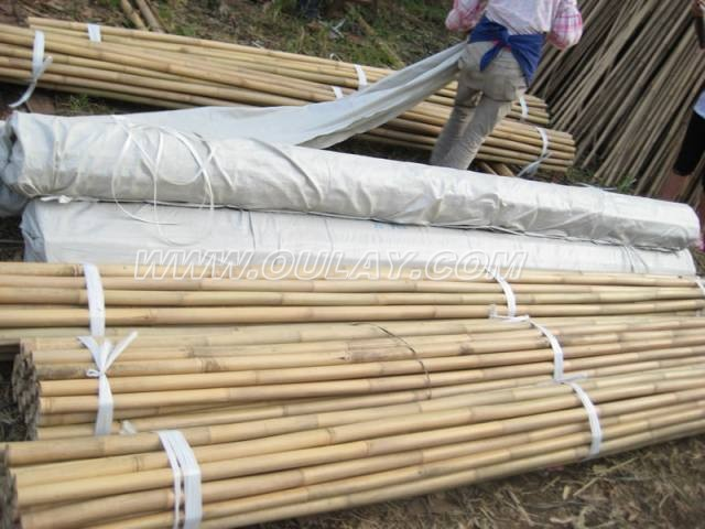 Bamboo canes in packing