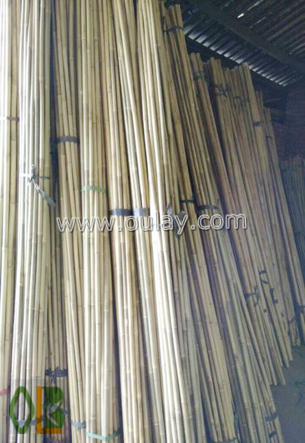 raw wholesale bamboo canes for sale