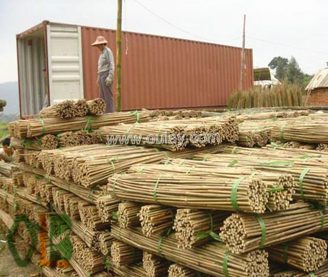 full container dry bamboo poles