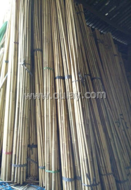raw bamboo stakes direct sale