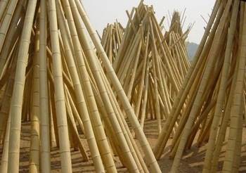 Bamboo in drying