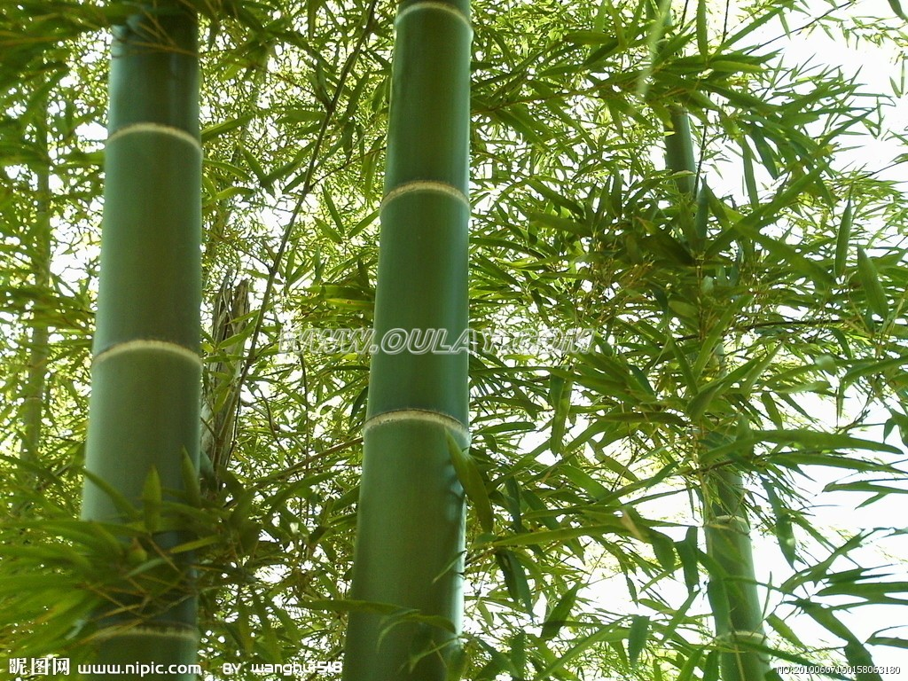 Natural bamboo in green