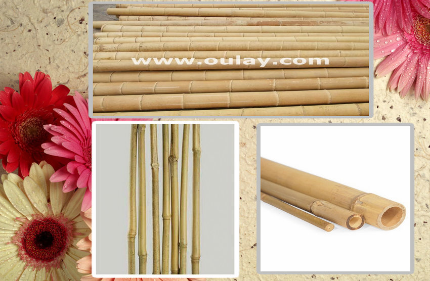 large bamboo for sale