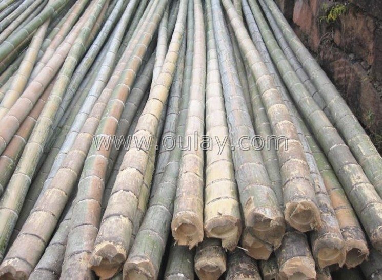 moso bamboo canes