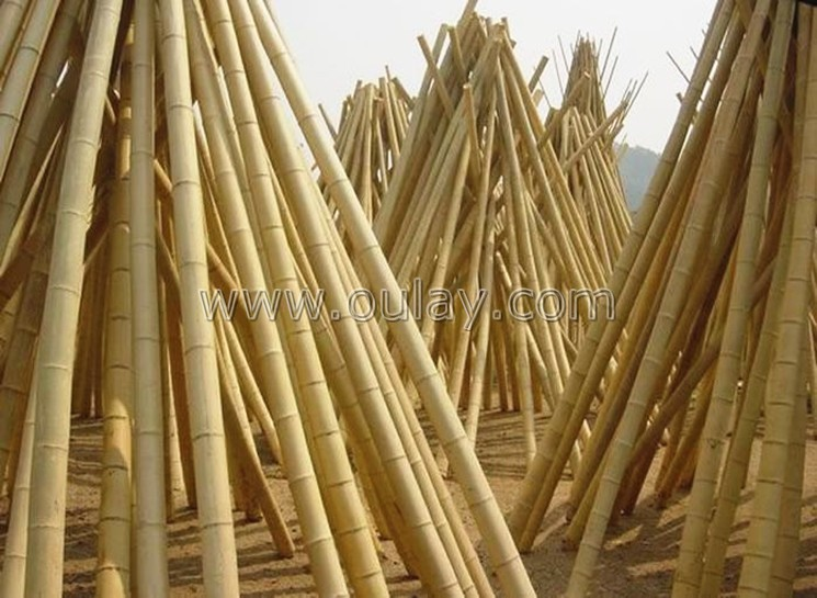 well-dry bamboo