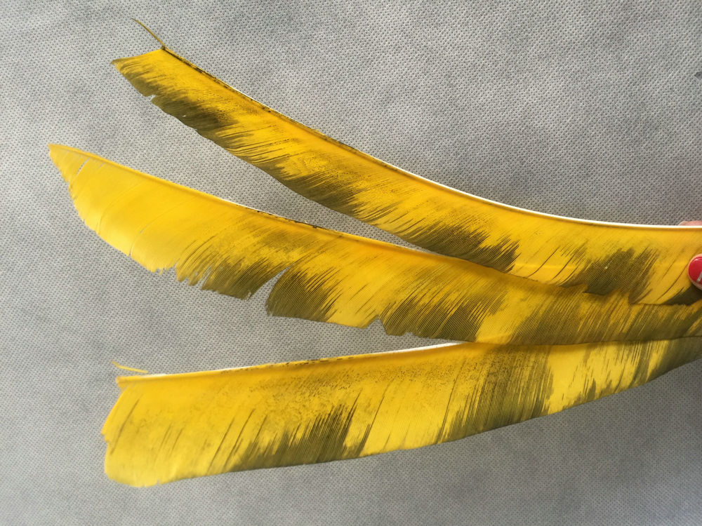 Yellow stripe archery full length turkey feather fro sale